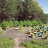 Pot Grower Has Green Thumb : Man arrested with 278 pot plants