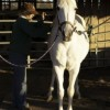 Rescued Horses and Other Attractions at Zephyr Stables