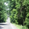 Route 307 Tree Removal To Take Place