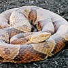 Snake Bites Eureka Elementary Student on Playground